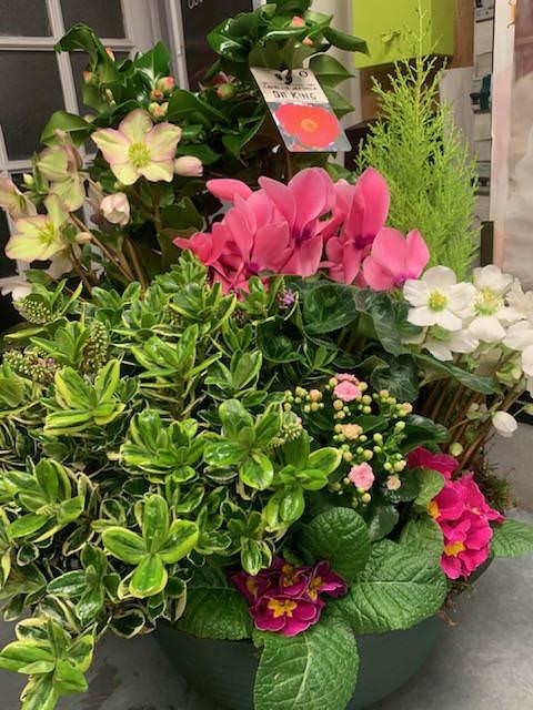 img 4657 1 - La Coupe de plantes